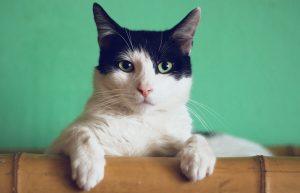 Read more about the article CBD pre mačky, o čo sa jedná a ako im môže pomôcť?