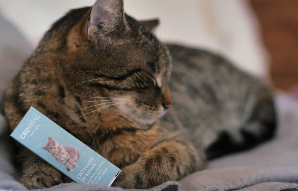Mačka a CBD olej značky CBD Vital