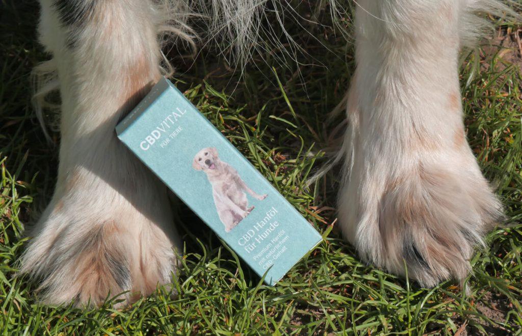 CBD olej pre zvieratá pri psích labkách