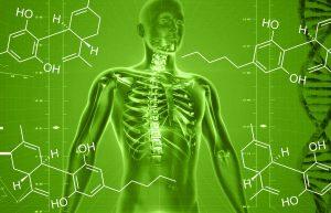 Read more about the article CBD a ľudský endokanabinoidný systém