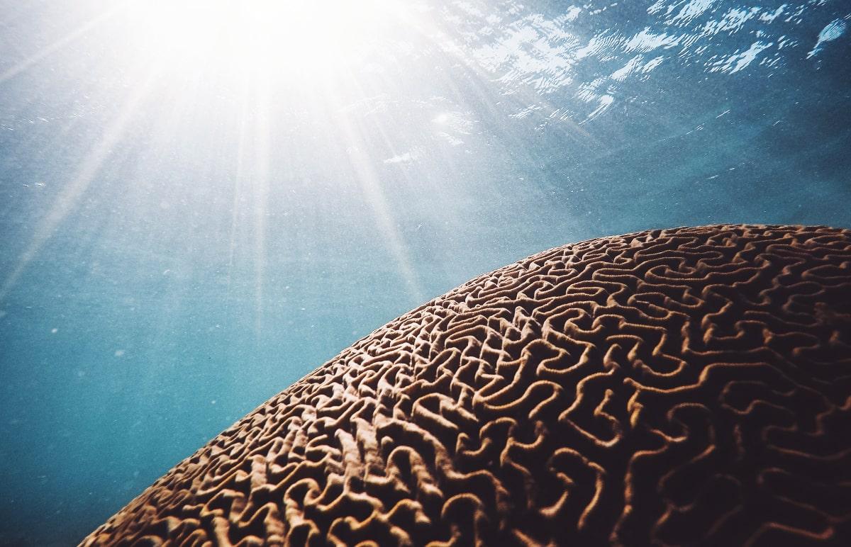 slnko svieti do hlbín oceánu na koral, ktorý vyzerá ako mozog