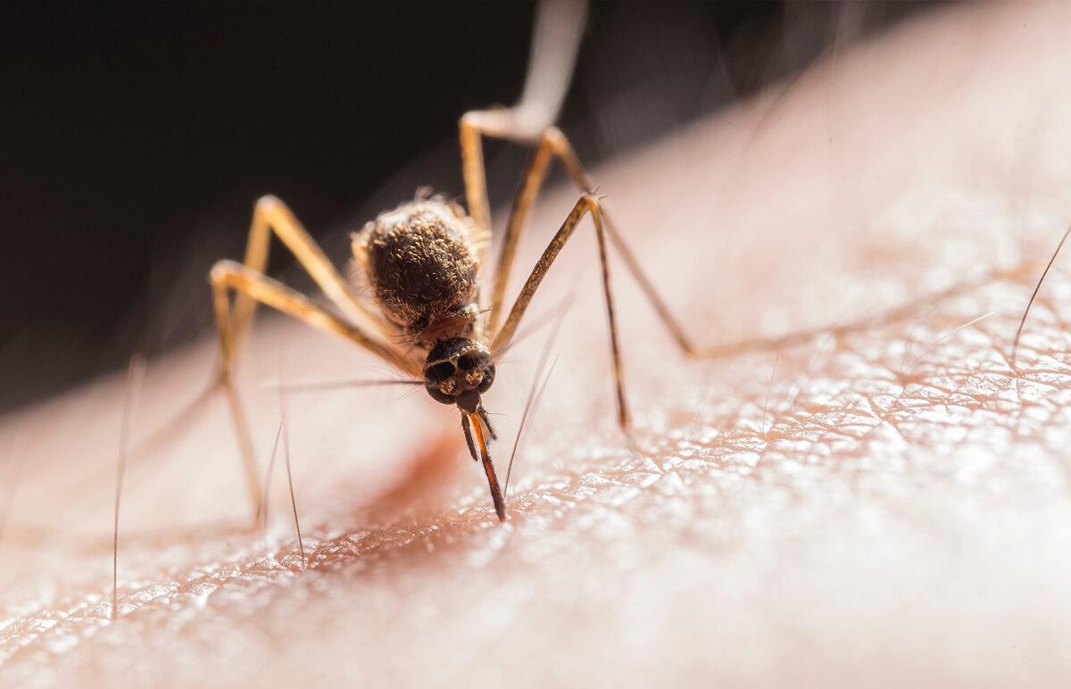 detailná fotografia komára na ľudskej koži