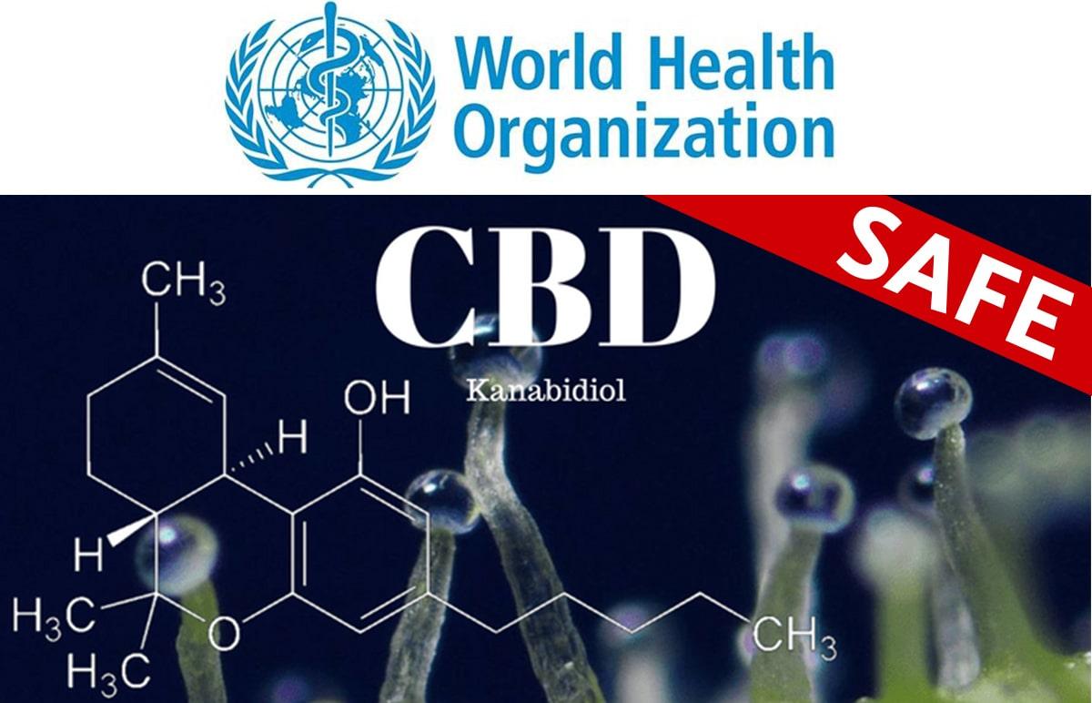 na obrázku je logo svetovej zdravotníckej organizácie WHO a vzorec CBD kanabidiolu s potvrdením bezpečnosti